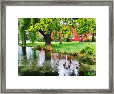 Ducks On Pond Framed Print