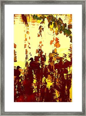 Ducks On Red Lake 2 Framed Print by Amy Vangsgard