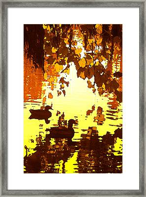Ducks On Red Lake B Framed Print by Amy Vangsgard