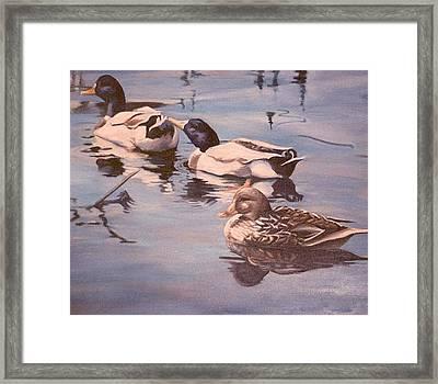 Ducks On The Cachuma Framed Print by Donna Tucker