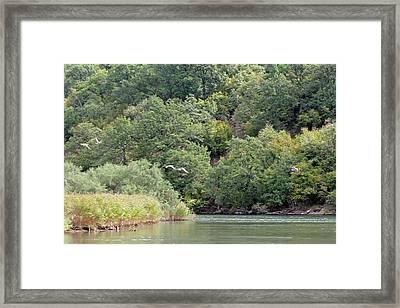 Ducks Over River Ropotamo Framed Print by Tony Murtagh