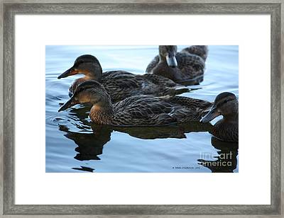 Ducks Reflecting Framed Print
