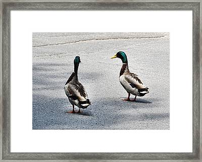 Duckwalk Framed Print by JAMART Photography