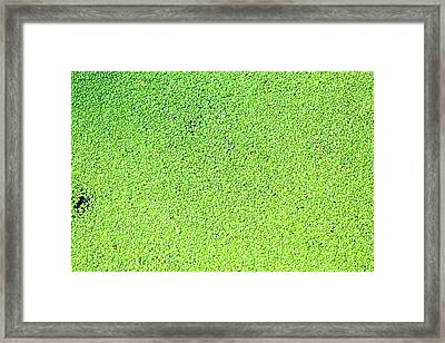 Duckweed Framed Print by Wladimir Bulgar