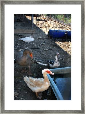 Ducky Framed Print by Doc Braham