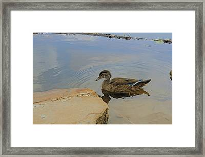 Ducky One Framed Print