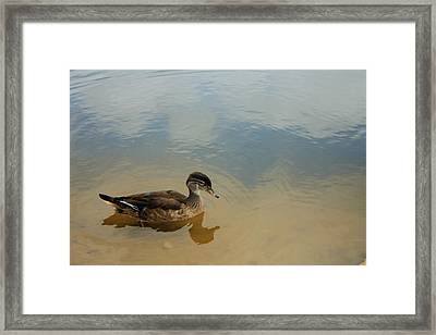 Ducky Two Framed Print