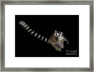 Dude Who Stole My Car Framed Print by Ashley Vincent