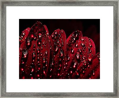 Due To The Dew Framed Print