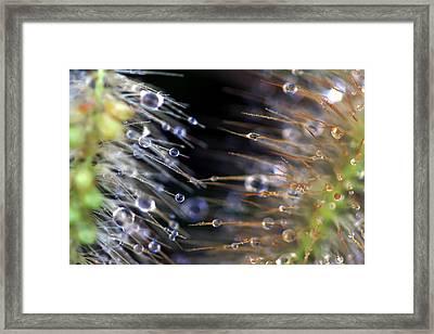 Duel Framed Print by Carolyn Fletcher
