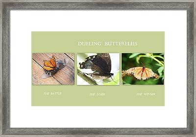 Framed Print featuring the photograph Dueling Butterflies Collage by Margie Avellino