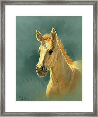 Dun Colt Portrait Framed Print by Paul Krapf