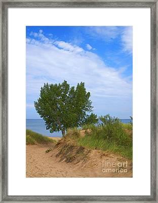 Dune - Indiana Lakeshore Framed Print