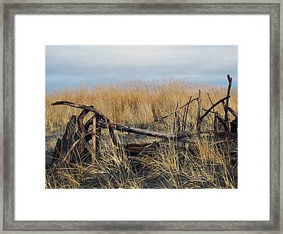 Dune Drifters  Framed Print by Pamela Patch
