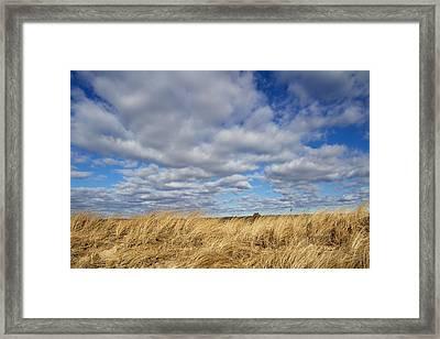 Dune Grass And Sky Framed Print by Allan Morrison