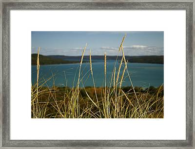 Dune Grass On A Sunny Fall Day Framed Print