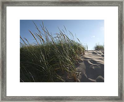 Dune Grass Framed Print by Tara Lynn