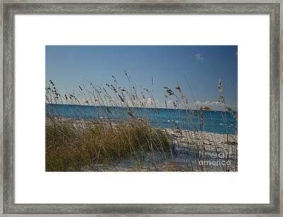 Dune Grasses Framed Print by Judy Wolinsky