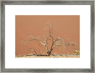 Dune In Namib-naukluft National Park Framed Print by Tony Camacho