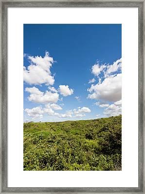Dunes And Mediterranean Bush Framed Print by Nico Tondini