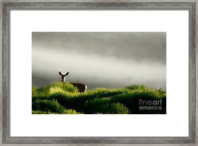 Dunes Deer P Framed Print