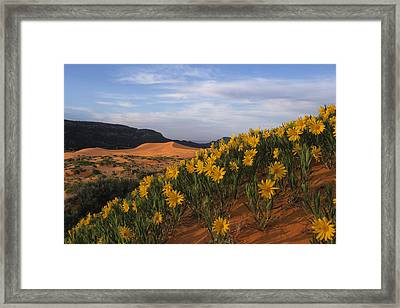 Dunes In Bloom Framed Print