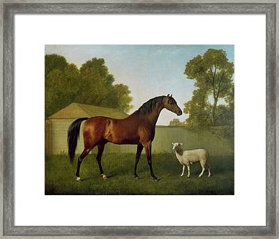 Dungannon, The Property Of Colonel Okelly, Painted In A Paddock With A Sheep, 1793 Framed Print by George Stubbs