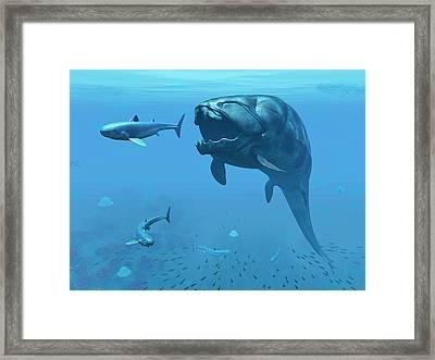 Dunkleosteus Hunting Primitive Sharks Framed Print
