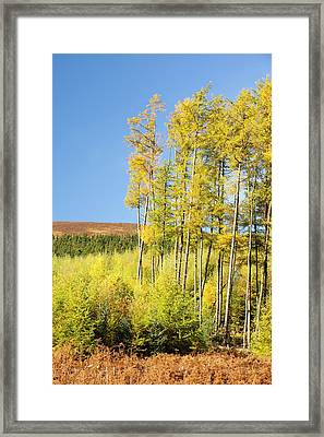 Dunsop Valley Framed Print by Ashley Cooper