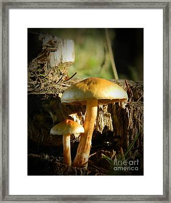 Duo Framed Print by Chalet Roome-Rigdon