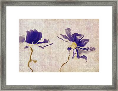 Duo Daisies - A01v03t01b Framed Print by Variance Collections