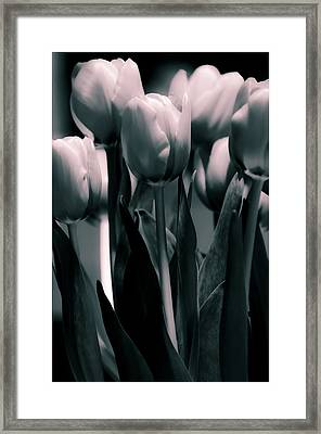 Framed Print featuring the photograph Duo-toned Tulip by Craig Perry-Ollila