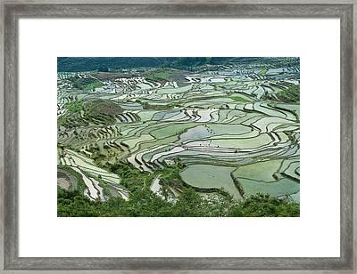 Duoyishu Hani Rice Terrace Near Yuanyang Framed Print by Tony Camacho