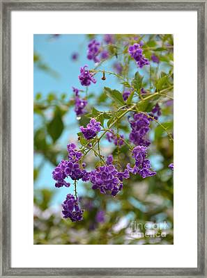 Framed Print featuring the photograph Duranta- Fresh Morning by Darla Wood