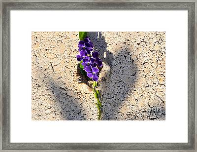 Framed Print featuring the photograph Duranta- Shadow Play 1 by Darla Wood