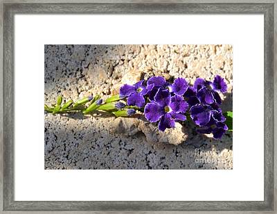 Framed Print featuring the photograph Duranta- Shadow Play 2 by Darla Wood