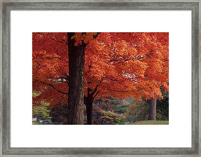 Druid Park -- Baltimore-maryland Framed Print