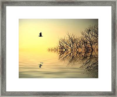 Dusk Flight Framed Print by Sharon Lisa Clarke