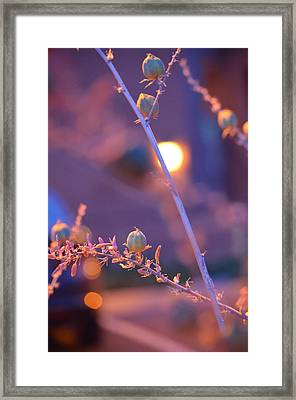 Dusk Flowers Framed Print