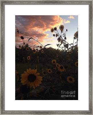 Dusk In Taos Framed Print by Polly Anna