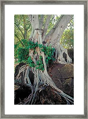 Dusk In The Garden 2 Framed Print by Terry Reynoldson