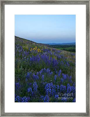 Dusk Over Lupine Framed Print by Mike  Dawson