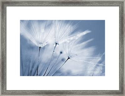 Dusty Blue Dandelion Clock And Water Droplets Framed Print by Natalie Kinnear