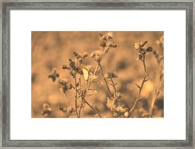 Dusty Desert  Framed Print