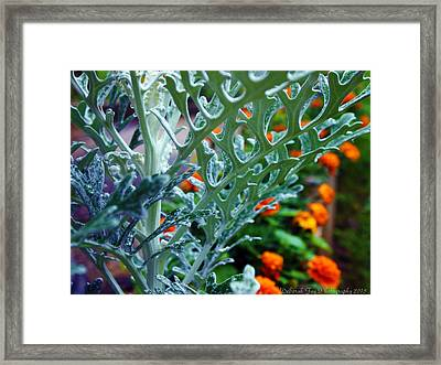 Framed Print featuring the photograph Dusty Miller And Dew Drops by Deborah Fay