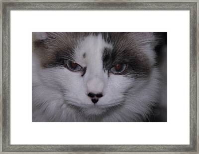 Dusty - The Cat's Meow Framed Print by Robyn Stacey