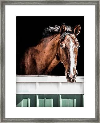 Dutch Beauty Framed Print by CarolLMiller Photography
