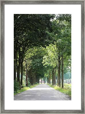 Dutch Landscape - Country Road Framed Print by Carol Groenen