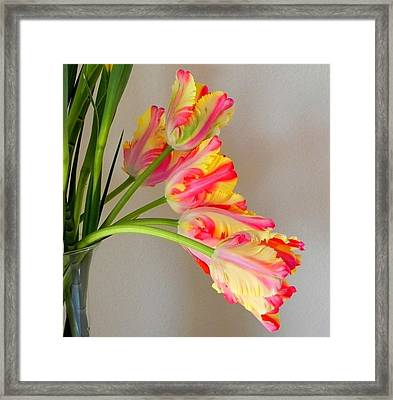 Dutch Tulips Framed Print