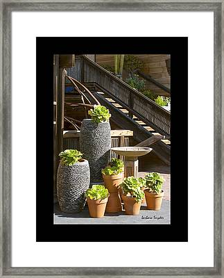 Duvet The Garden Gallery Morro Bay California  Framed Print by Barbara Snyder